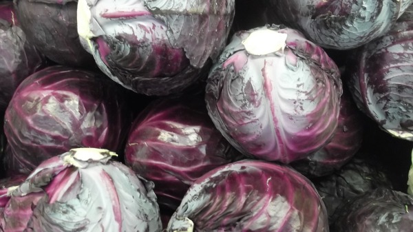 cabbage-2084224_1280
