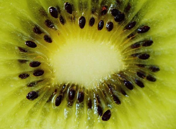kiwi-1293598_1280